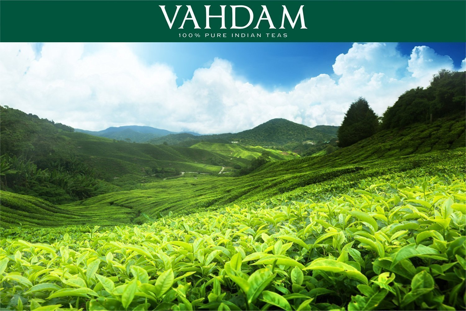 VAHDAM oolong tea is 100% Pure Indian Teas